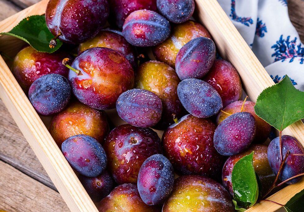 Head-to-head comparison:  plum juice vs prune juice