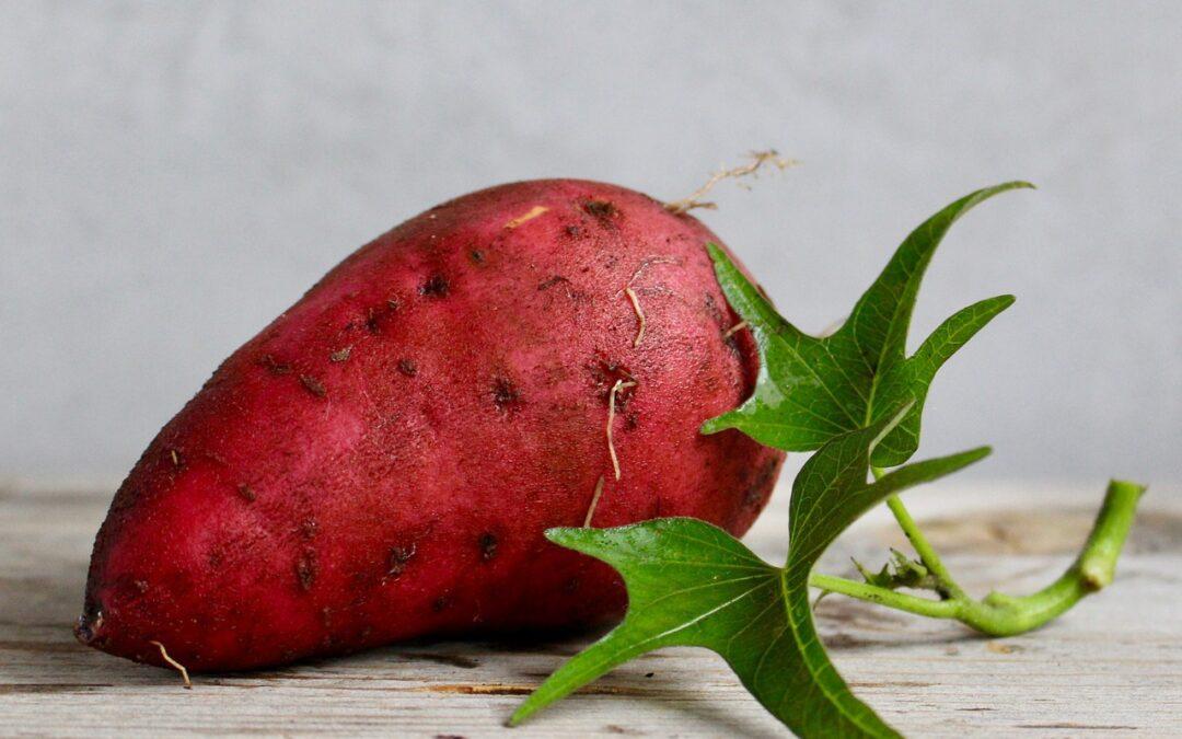 can you juice sweet potato