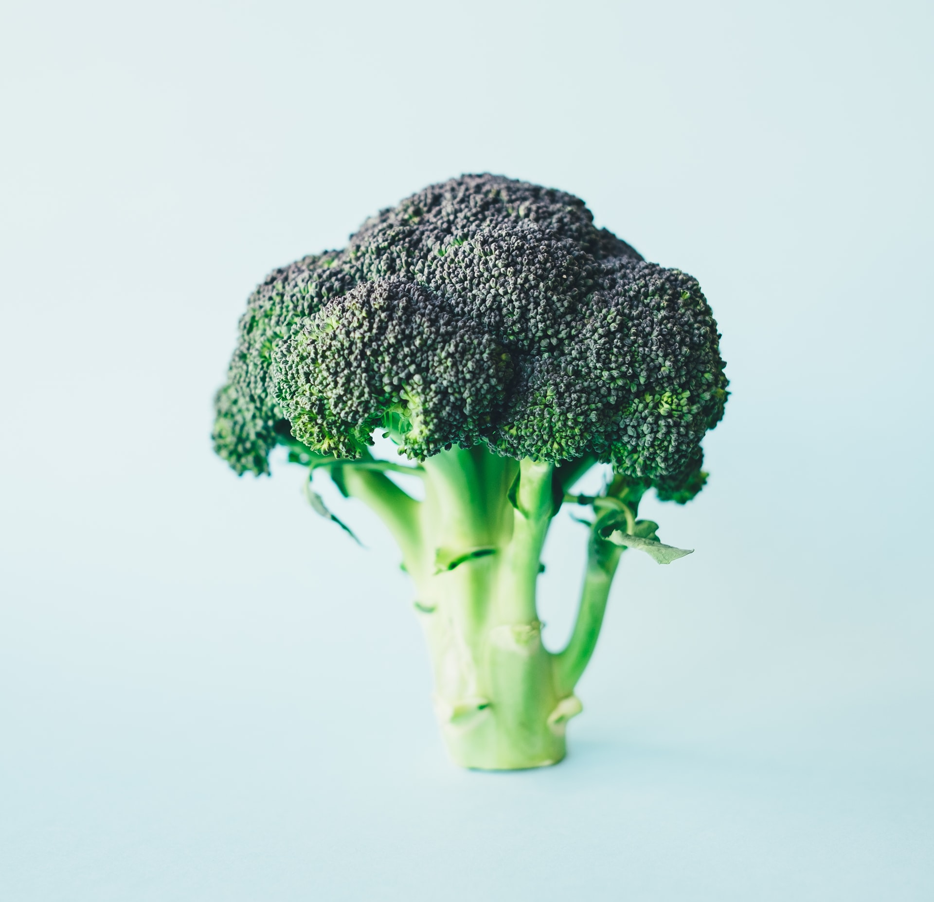 Investigating Broccoli Juice and Its' Benefits