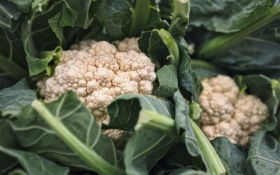 Can You Juice Cauliflower? We Allay All The Doubts!